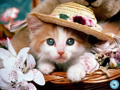یک گربه زیبا برای فروش